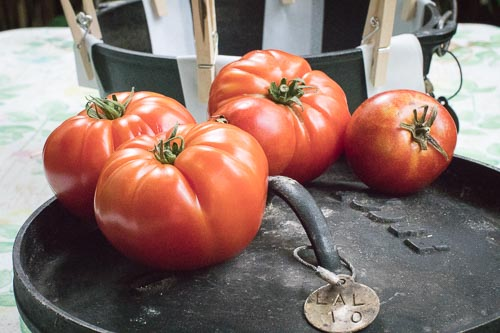 Tomatoes on 10-inch Camp Dutch Oven Lid